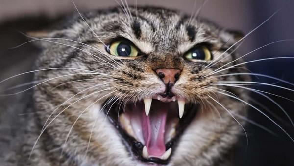 Кот-ревнивец выгнал бойфренда хозяйки в подъезд в одних носках