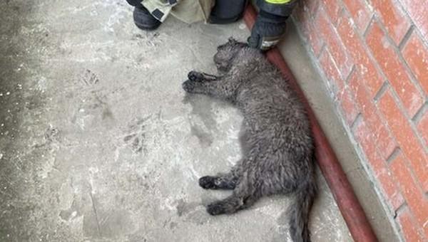 В Подмосковье пожарные реанимировали кота, надышавшегося гарью