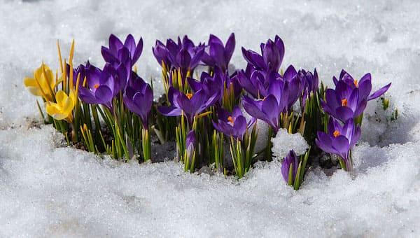 Синоптик спрогнозировал сдвиг весны в Москве и Подмосковье