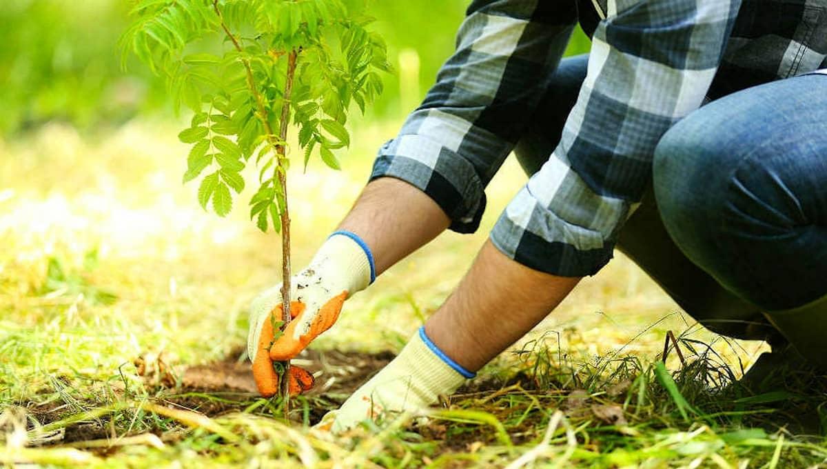 Серпухов закупает... деревья на миллионы