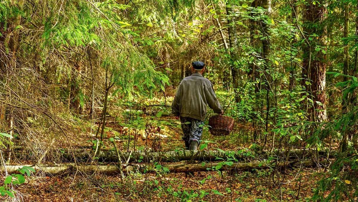 Какие грибы можно найти в подмосковных лесах уже сейчас?