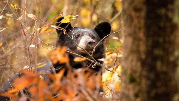 В Подмосковье медведь откусил часть ноги грибнику