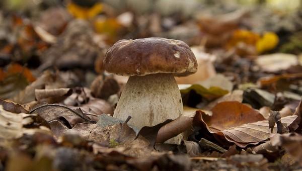 Грибники предупреждают: заканчивать грибной сезон еще рано!