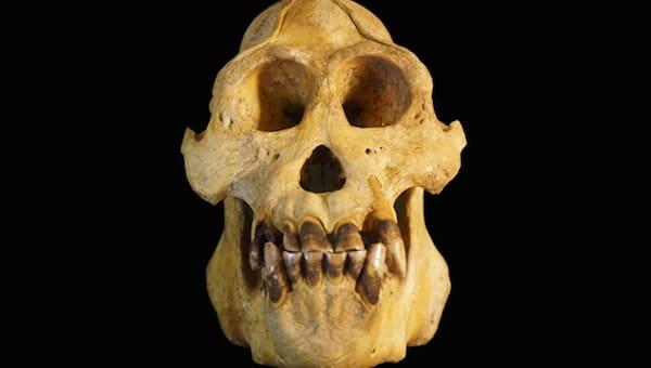 Полсотни черепов похитили неизвестные из научной лаборатории