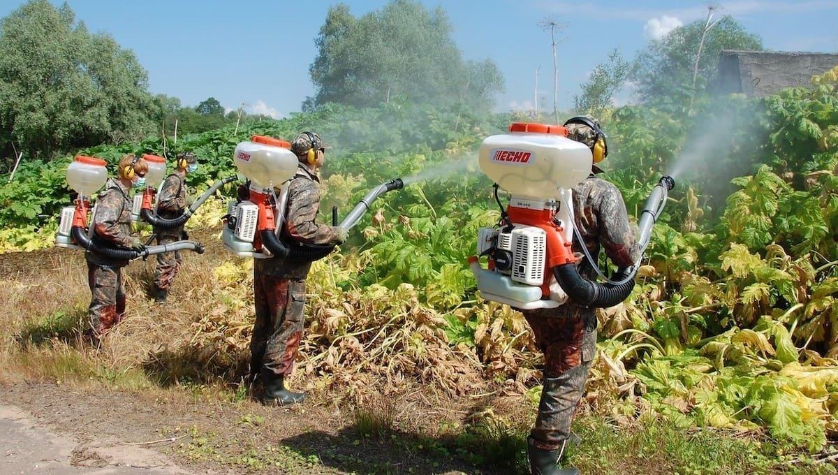 Жителям Подмосковья указали места произрастания очень опасного растения