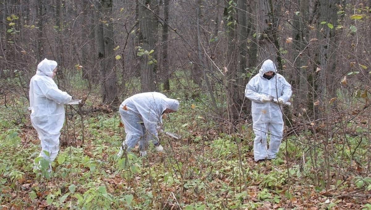 В Серпухове спасительную вакцину решили разбросать в лесу
