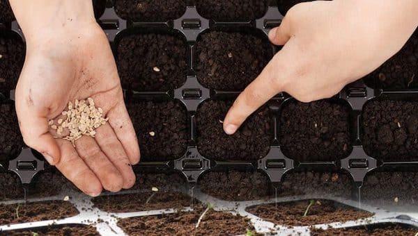 Что сеять в феврале: 5 овощей, которые уже пора сажать