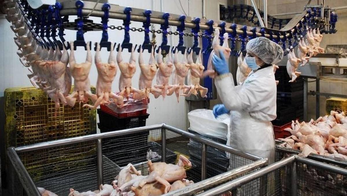 Женщину закрутило в конвейер на крупной птицефабрике