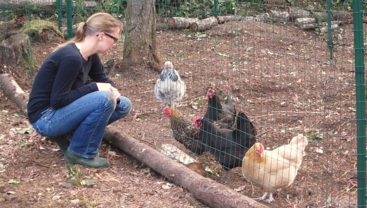 Верховный суд запретил разводить кур на садовых участках