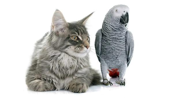 Суд рассмотрит иск о выселении из квартиры... кошки и попугая