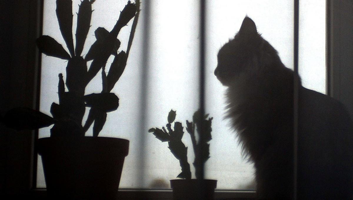 Коты 18 дней ждали хозяев в эвакуированном доме в Ногинске