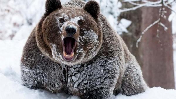 На территорию подмосковного санатория пришли медведи