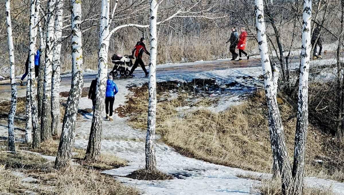 Люди в Подмосковье потянулись в леса за даром природы
