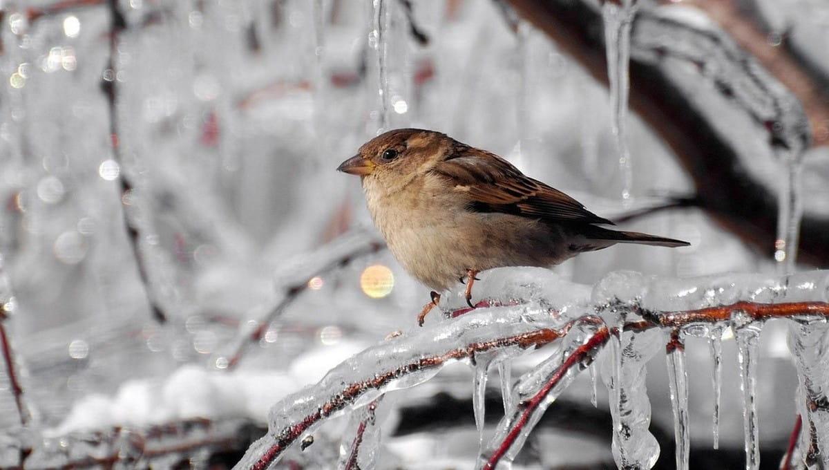 Вернутся ли зимние морозы в Подмосковье этой весной?