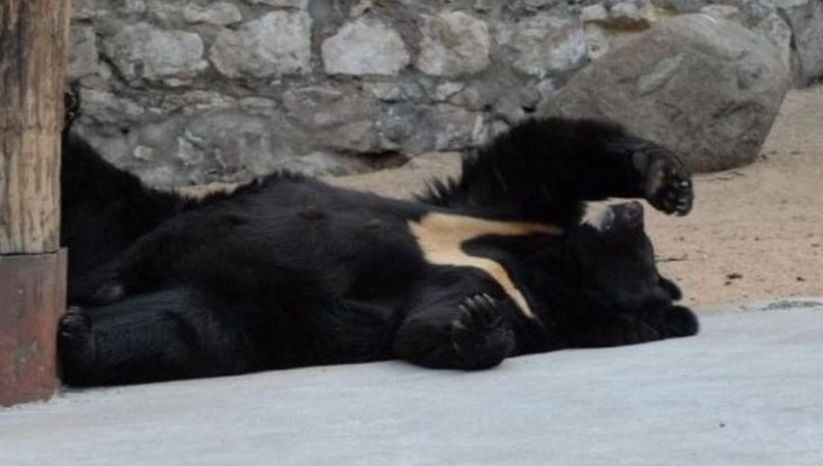 В Московском зоопарке медведица так и не вышла из гибернации