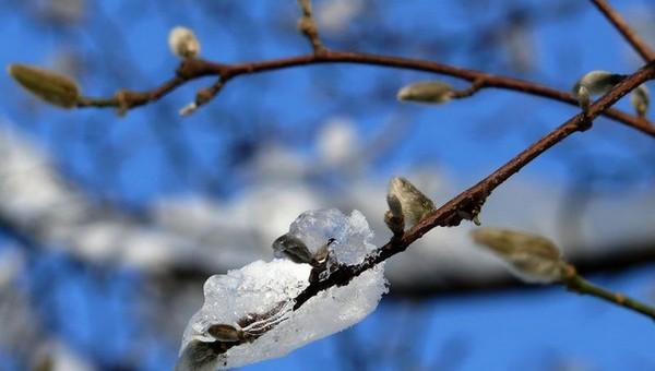 Жителям Подмосковья пообещали «коралловый» апрель
