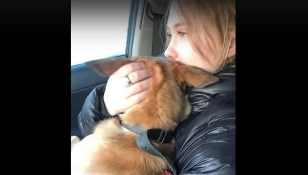 Девушка целый месяц искала собаку, выброшенную ее парнем из ревности