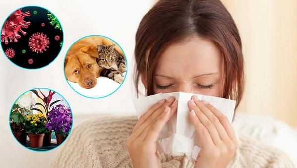 Орехи, генетика и «голые» кошки: Мифы и факты об аллергии
