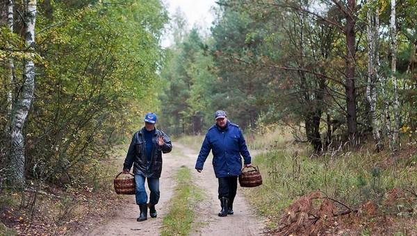 Какова ситуация с грибами в лесах Подмосковья?