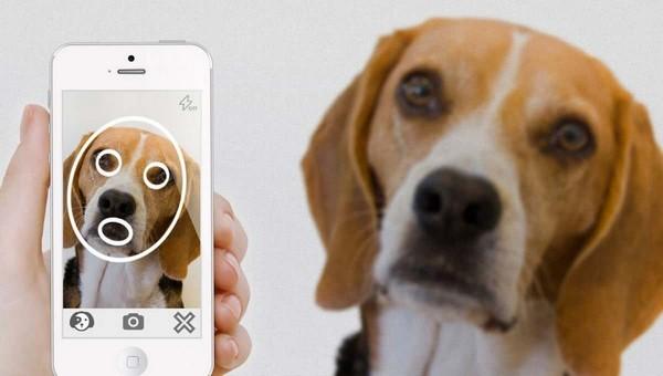 В России появится приложение для поиска пропавших собак