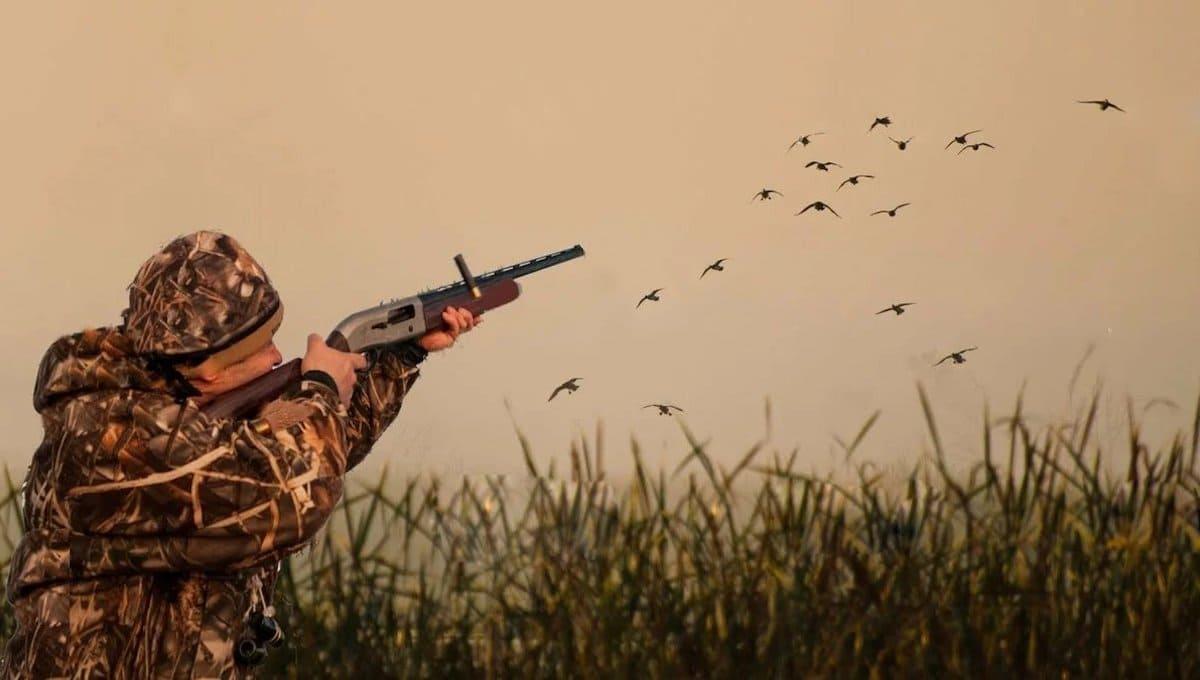 На юге Подмосковья открылся сезон бессмысленного убийства птиц