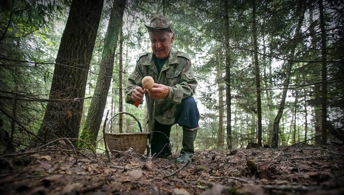 Любимые россиянами грибы пошли в лесах Подмосковья