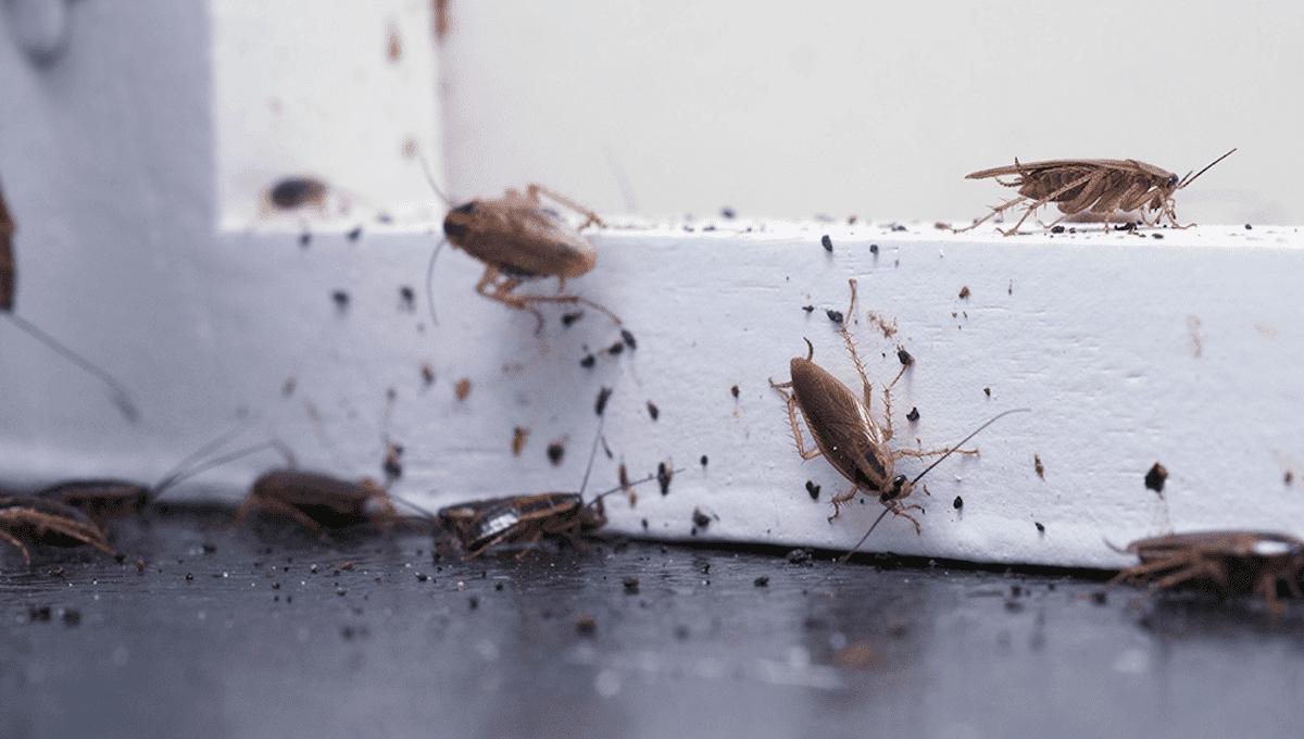Жители Серпухова переживают нашествие тараканов