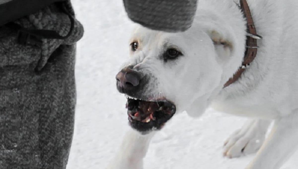 Хозяйка собак, загрызших насмерть ребенка, в суде отделалась легким испугом