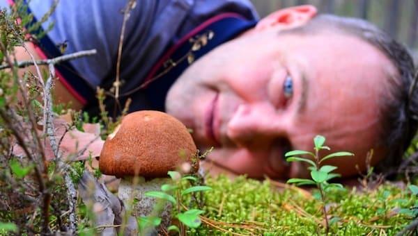 В минэкологии Подмосковья разъяснили ситуацию со сбором грибов