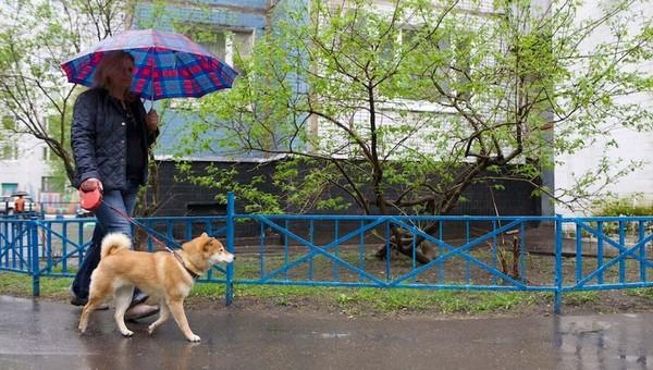 Когда в Подмосковье закончится сезон дождей?