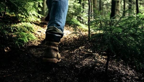 Осенние грибы начали захватывать леса Подмосковья