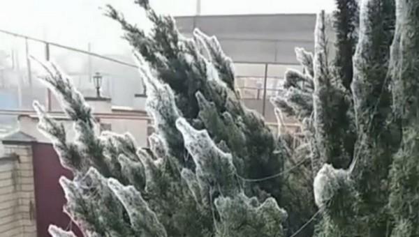 Полчища пауков наводнили российский город, опутывая все паутиной