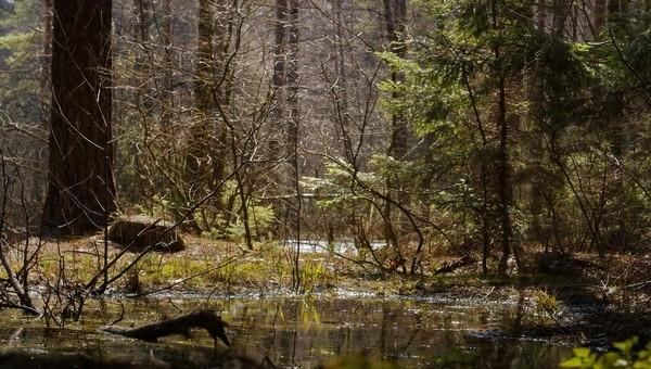 Аномально ранний грибной сезон начался в лесах Подмосковья