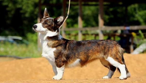 Сегодня в Серпухове состоится выставка собак пяти пород