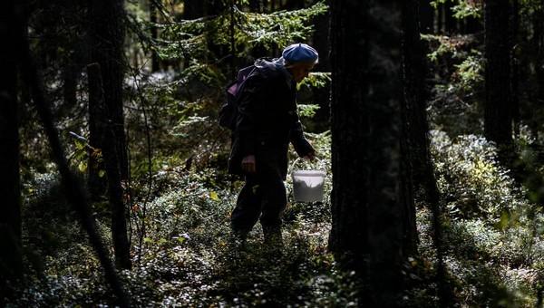 В подмосковном лесу неделю ищут пропавшего грибника