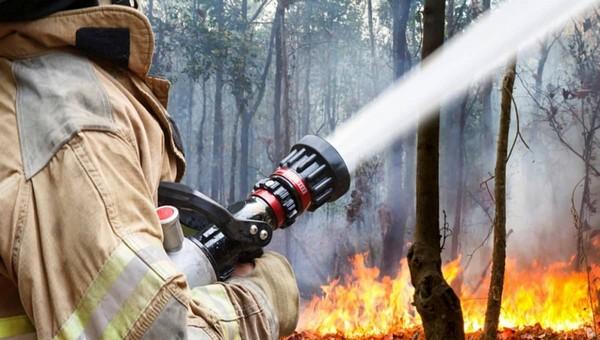 В Подмосковье загорелись леса