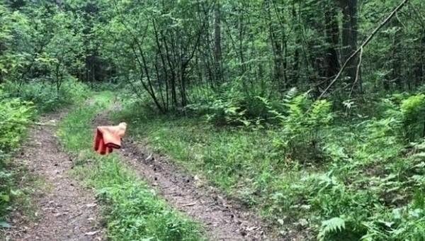 В лесах Подмосковья некто расставляет ловушки на людей