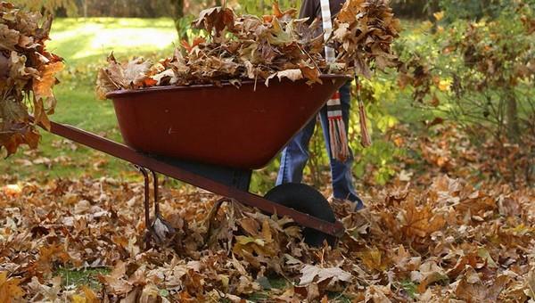 Что сделать с опавшими листьями в саду? Три простых рецепта