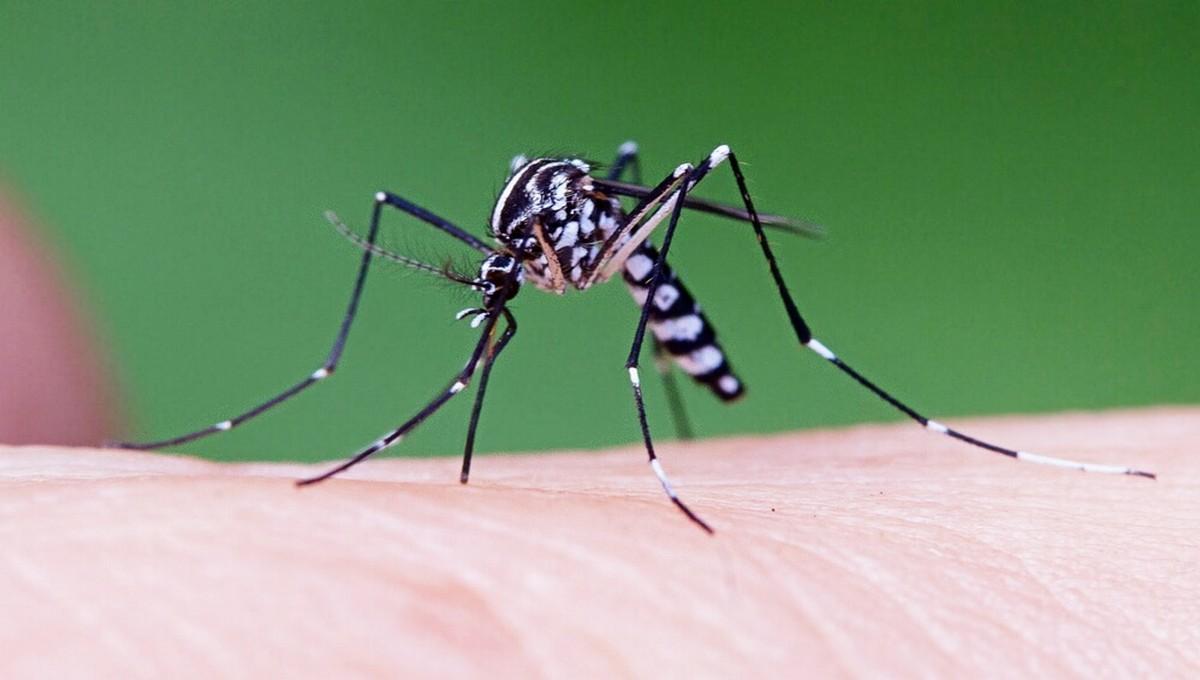 Опасные комары впервые замечены в России
