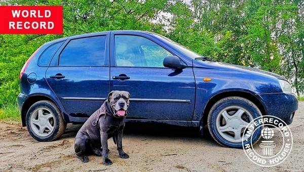 Российский пес поставил мировой рекорд