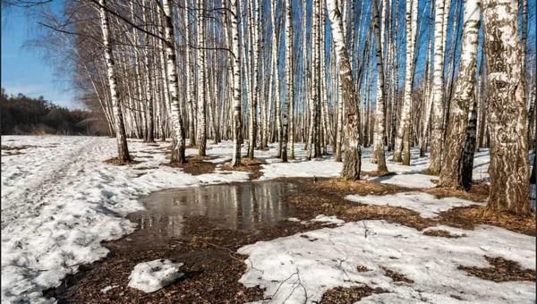 Ученые назвали дату, когда снег в Подмосковье сойдет полностью