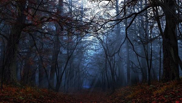 Еще одну ужасную находку сделали люди в подмосковном лесу