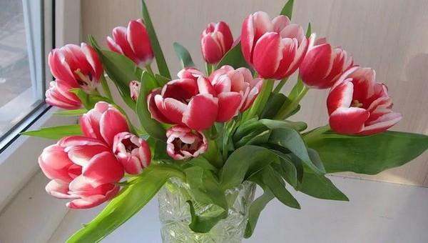 Как сделать, чтобы тюльпаны стояли в вазе дольше?