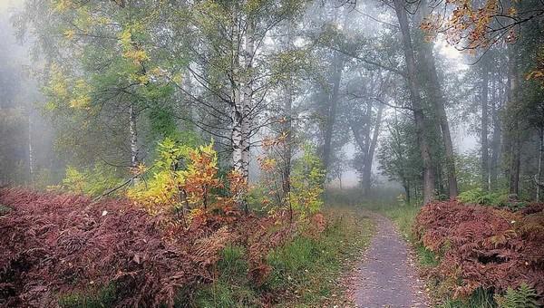 В лесах Подмосковья поселилась неявная опасность