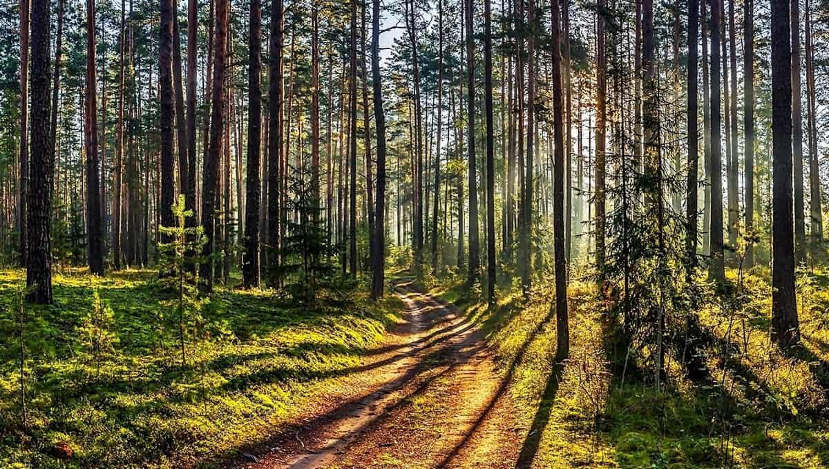 В лесах Подмосковья завелась смертельная опасность