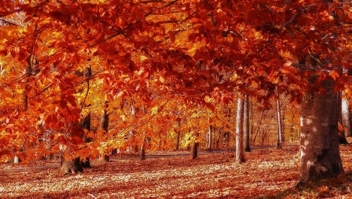 Золотая осень пришла в столичный регион надолго?
