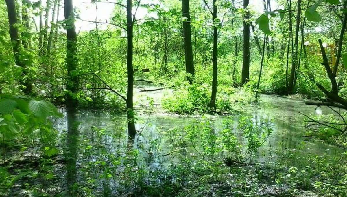 Москвичку чудом спасли из… болота