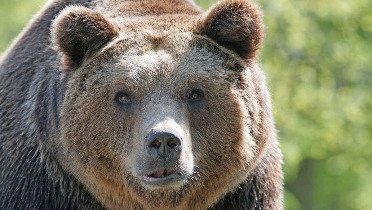 Огромный медведь пришел к домам людей в Подмосковье
