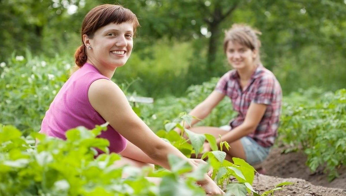 Что можно делать в огороде в полнолуние?
