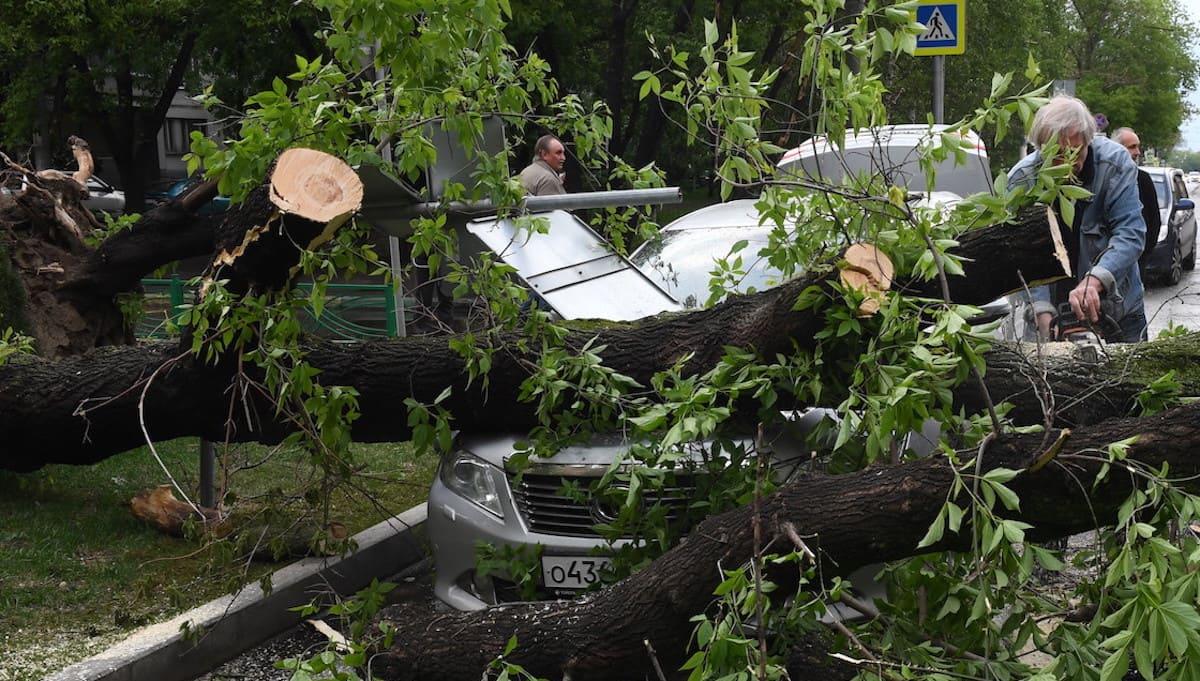 Ураган в Подмосковье убил женщину